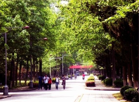 南京林业大学 道路