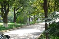 上海大学 道路