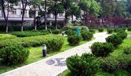 中南财经政法大学 道路