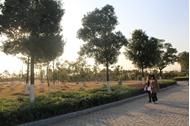 中国传媒大学南广学院 绿化
