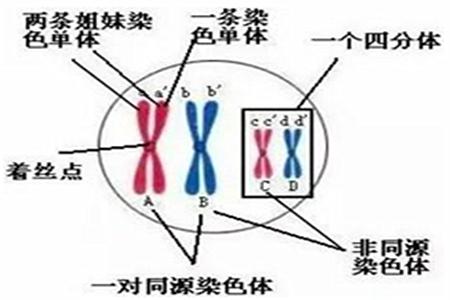 生物复习:教你快速区分有丝分裂和减数分裂