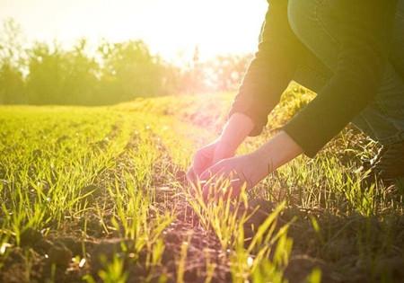 2018自主招生:与农学相关的好专业究竟有哪些?