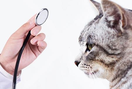 香港城市大学:2018年新增动物医学专业