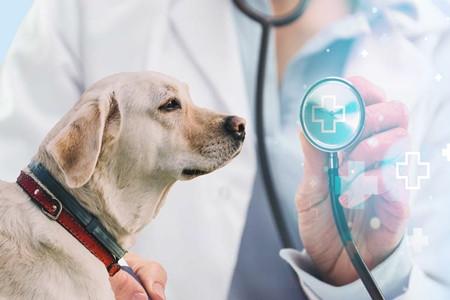 专业解读——动物医学类